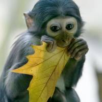 7 Cute Animals That Would Make Terrible Pets ...