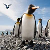7 Fun Facts about Penguins ...