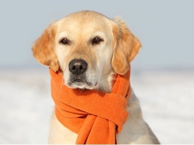 7 Tips for Looking after Your Pet in Winter ...