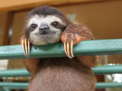 7 Informative and Entertaining Fun Facts about Sloths ...