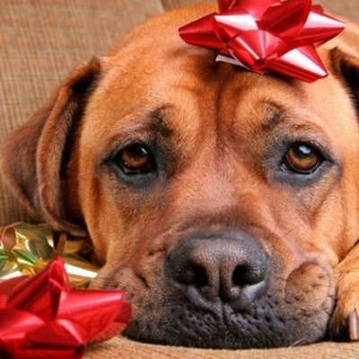 7 Tips for Keeping Your Pets Safe at Christmas ...