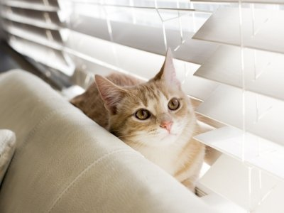 7 Ways to Stop Your Cat from Scratching Your Furniture ...