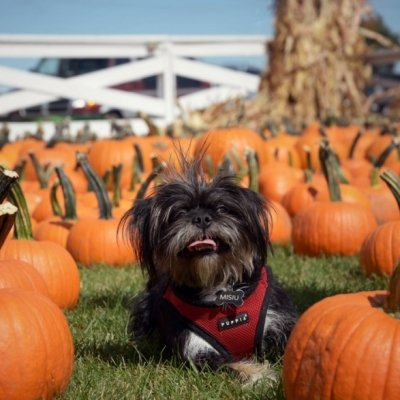 7 Tips for Keeping Pets Safe at Halloween ...