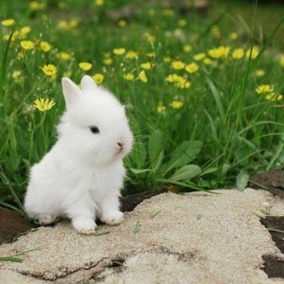 7 Interesting Facts You May Not Know about Rabbits ...