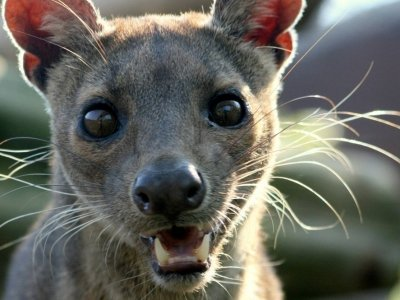 7 of the Cutest Animals in Madagascar ...