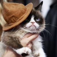 The Trailer for 'Grumpy Cat's Worst Christmas' Will Make You LOL ...