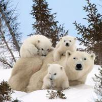 7 Truly Admirable Mothers in the Animal Kingdom ...