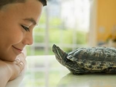 5 Interesting Pets to Consider for Your Kids...