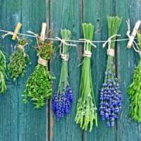 7 Wonderful Herbs to Eat That Combat Acne ...
