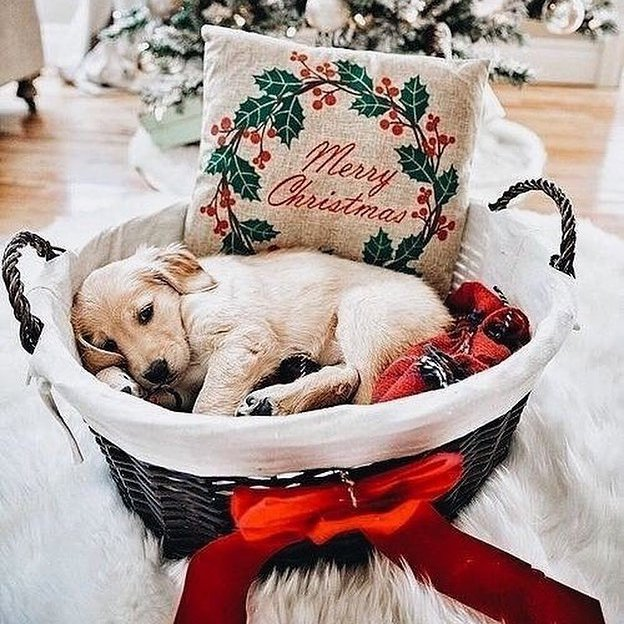 10 Adorable 😍 Pets 🐶🐱 Dressed to Impress ✌️ This Christmas 🎄 ...
