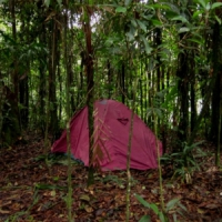 7 Tips on Camping out in the Jungle ...