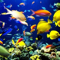 9 Best Diving Sites ...