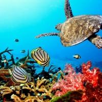 8 Underwater Wonders ...
