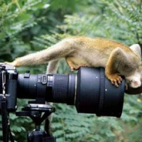 8 Top Wildlife Photos Every Traveler Should Take ...