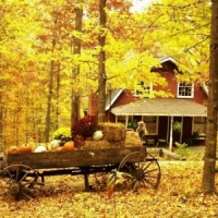 8 Places to Enjoy the Wonderful Colors of Fall ...