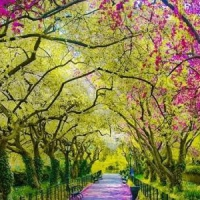 7 Attractions to Visit in Central Park ...