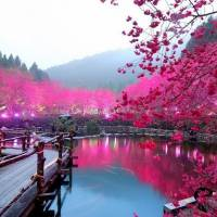7 Pink Natural Wonders of the World ...