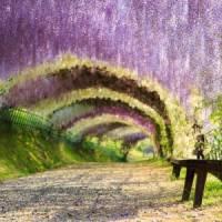 7 Stunning Natural Tree Tunnels around the World ...