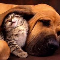 7 Steps to Choosing a Kennel or Cattery for Your Furry Friends ...