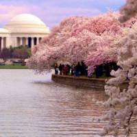 7 Must See Monuments in Washington DC ...