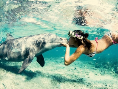 7 Super Places to Swim with Dolphins ...
