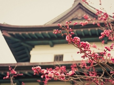 7 Interesting Facts about Japan ...