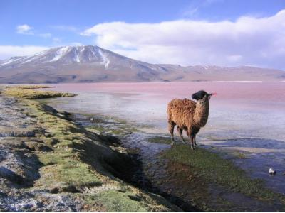 8 Amazing Landscapes of Bolivia ...