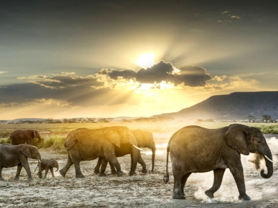 20 Amazing Things to Do in Africa ...