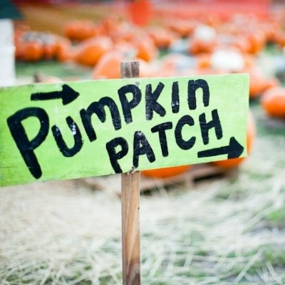 7 Epic Pumpkin Patches in the United States ...