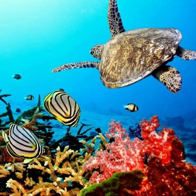40 Wonders of the Coral Reef ...
