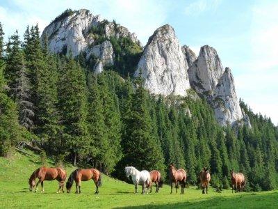 7 Brilliant Reasons to Visit Romania ...