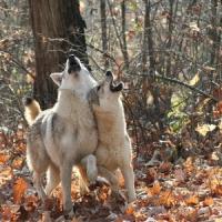 5 Reasons I like Werewolf Movies ...