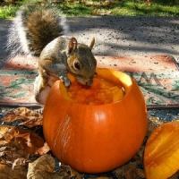5 Spooky Pumpkin Designs ...