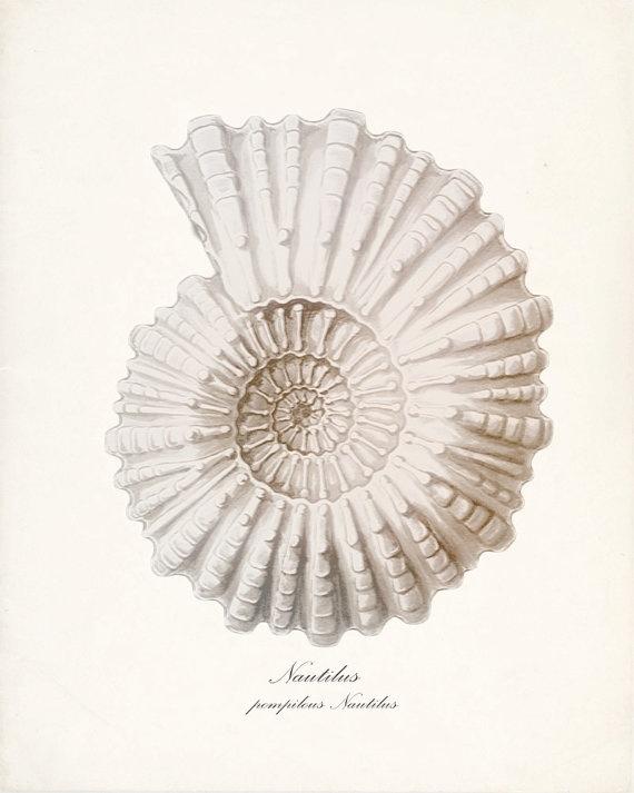 vintage shell print.