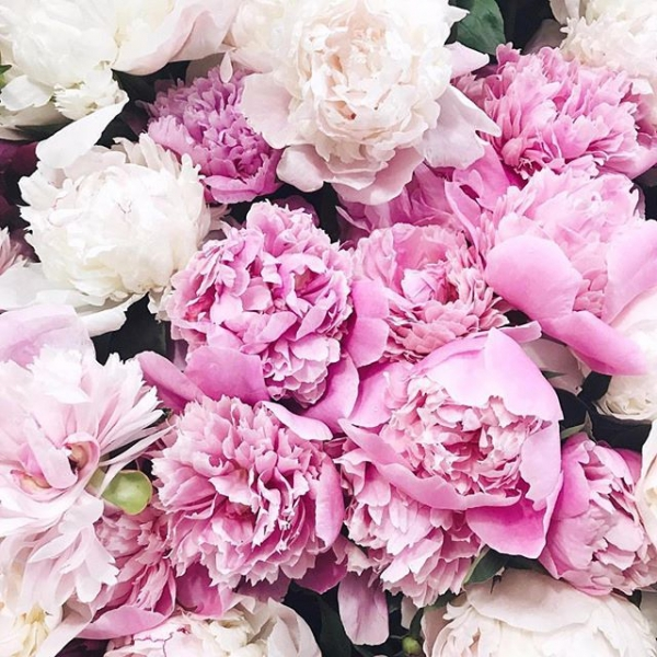 18 of Today's Drool Worthy 🤤 Flowers Inspo for Girls Who Love 💖 Having Flowers 🌺 around ...