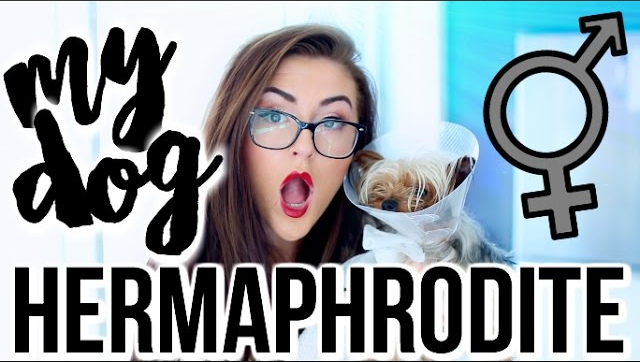 STORYTIME: My Dog is a HERMAPHRODITE!!!! || Sarah Belle 🎥