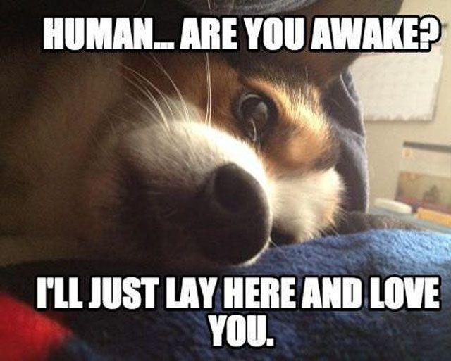Sounds like my dogs