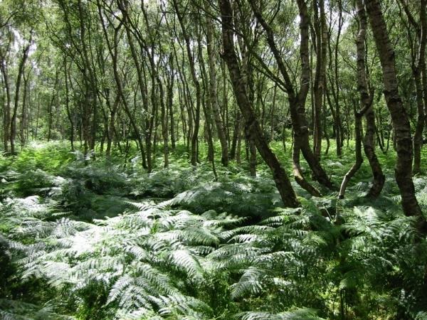 Robin Hood's Sherwood Forest, England