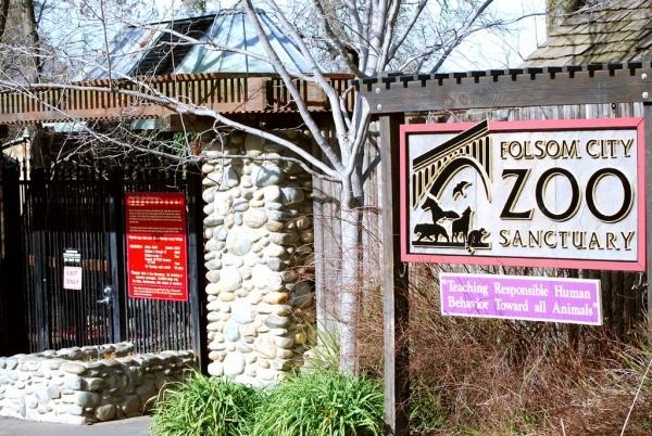 See the Wildlife at Folsom Zoo Sanctuary