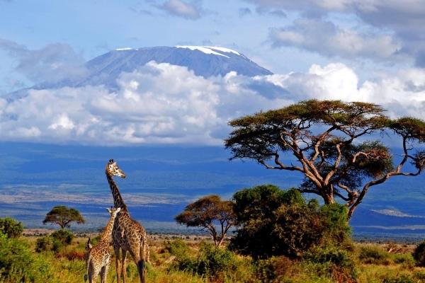 Climb Mt. Kilimanjaro