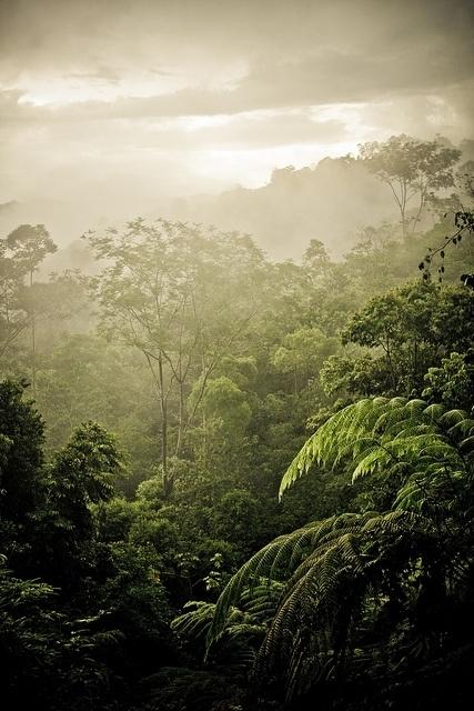Take a Canopy Tour in Costa Rica
