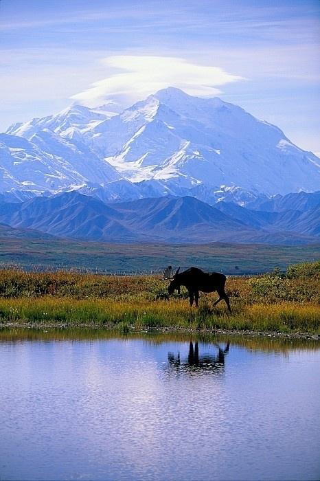 Explore the Wilds of Denali National Park, Alaska