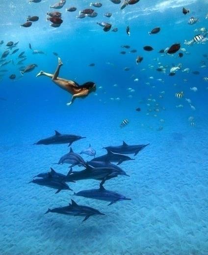 Swim with Dolphins in Bimini, the Bahamas