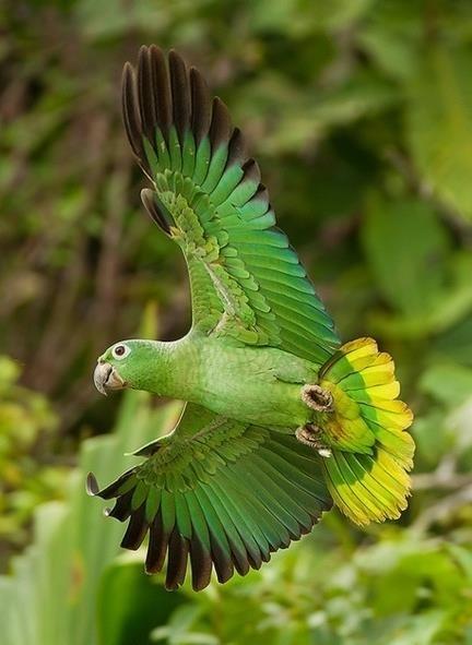WATCH Wildlife on the Amazon