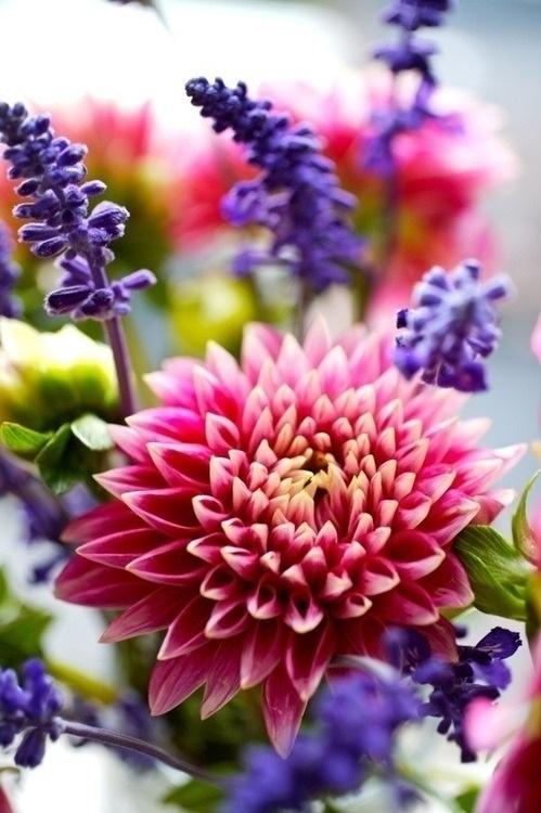 Flowers…