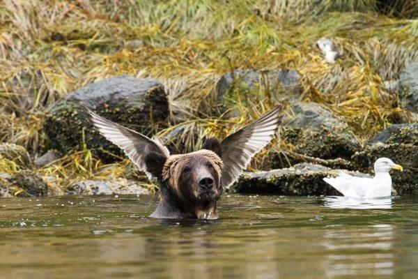 bird, vertebrate, wildlife, fauna, water bird,