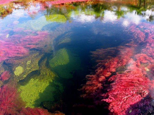 marine biology,reflection,coral reef,reef,coral,