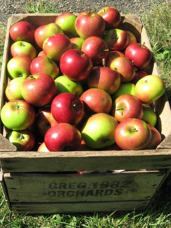 Summer Rambo Apples