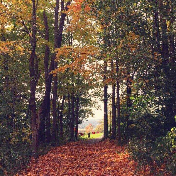 nature, path, woodland, leaf, autumn,