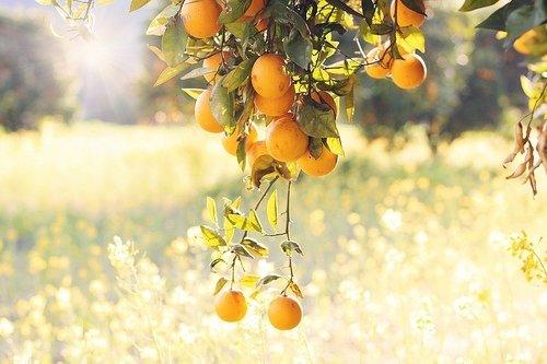 nature,yellow,flora,branch,flower,